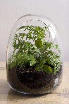 hand blown glass terrariums