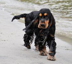At the beach taking a swin