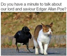 32 Cat Memes To Ensure You Have A Fabulous Caturday - World's largest collection of cat memes and other animals Funny Animal Memes, Funny Animal Pictures, Funny Animals, Cute Animals, Funny Memes, Animal Humour, Top Memes, Funny Photos, Funny Dogs