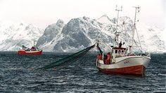 Nelle isole Lofoten, dove tutto gira intorno al merluzzo: storia d'amore e dipendenza