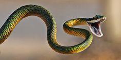 Snake  Documentary Snake Attack   Dangerous Snake Bite Video Documentary