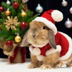 some bunny love Christmas! Animals And Pets, Baby Animals, Funny Animals, Cute Animals, Cute Baby Bunnies, Funny Bunnies, Rabbit Pictures, Animal Pictures, Pet Bunny Rabbits