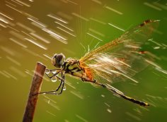 I also love dragonflies