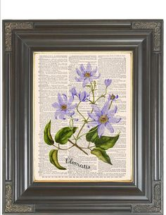 BOGO SALE Pale purple Clematis Flower Dictionary art print wall decor printed on antique dictionary or music book page Item No 734