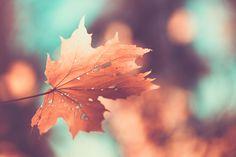 ≡ Swiss leaf