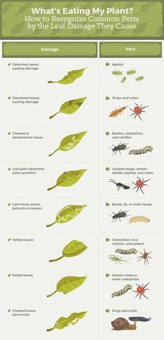 What pests are eating my plants