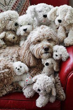 Encuentra el perro.