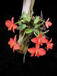 house plants for shade Flowers Nature, Exotic Flowers, Amazing Flowers, Tropical Flowers, Beautiful Flowers, Orchids Garden, Orchid Plants, Orchid Varieties, Orquideas Cymbidium