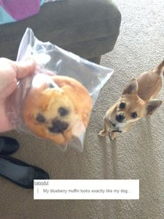 I bought it in a pet shop // funny pictures - funny photos - funny images - funny pics - funny quotes - #lol #humor #funnypictures