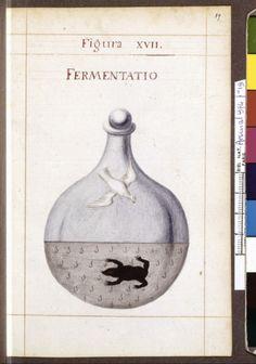 Figura XVII - Fermentatio - Sapientia veterum philosophorum, sive doctrina eorumdem de summa et universali medicina 40 hierogliphis explicata