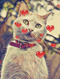 Try this effects combo on Photo Lab Photo Editing, Cats, Animals, Editing Photos, Gatos, Animales, Animaux, Photo Manipulation, Animal