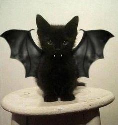 Sweet vampire cat!