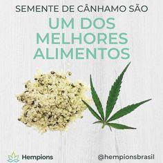 As sementes de cânhamo contêm os nutrientes mais importantes 💪 🌱🏆 - gorduras ômegas saudáveis - proteína de alta qualidade - Fibras - Minerais - Vitaminas - Fitoquímicos secundários A Hempions na Europa faz massas, proteína em pó, farinha, óleo e muito mais a partir das sementes de cânhamo. Infelizmente, ainda não somos capazes de oferecer produtos com sementes no Brasil, mas estamos trabalhando pra isso. Pineapple, Fruit, Food, Hemp Fabric, Raw Protein Powder, Hemp Seeds, Minerals, Vitamins, Noodle