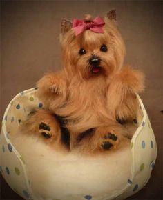 """""""Little Fluff"""" Yorkie Pup"""