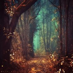 Mystic Fairy Tale Forest The Netherlands | ༺ ♠ ༻*ŦƶȠ*༺ ♠ ༻