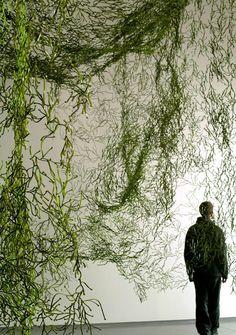 Algas colgantes. Paul Tahon