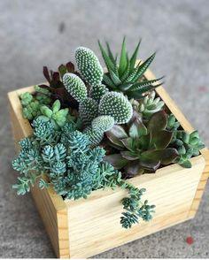 Mini Cactus Garden, Cactus House Plants, House Plants Decor, Succulent Gardening, Cacti And Succulents, Plant Decor, Planting Succulents, Container Gardening, Garden Plants