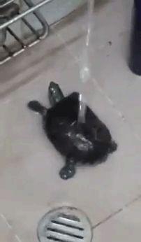He's sure enjoying that shower!