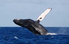I would love to get upclose to a whale. I have seen where Cabo might be a good place to do that.