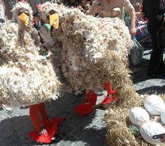 Birds at Aalborg Carnival