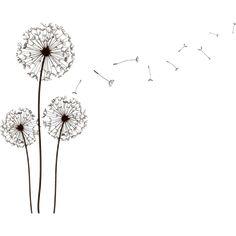 dandelions | Tumblr