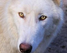 Exotic animal sanctuary that is home to wolves, tortoises, bobcats, cougars, coyotes and many other animals. FREE to visit and pet the animals!