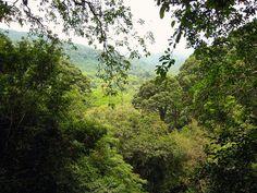 Traverser la jungle de Bornéo (Indonésie), forêt tropicale humide parmi les plus vierges de la planète et la traversée d'une côte à l'autre une des aventures les + fantastiques et les - entreprises d'Asie. De Balikpapan, remonter le fleuve Sungai Mahakam (env. 1 semaine pour 900 km). De l'autre côté, descendre le Sungai Kapuas, le + long fleuve insulaire, mais les monts Muller = obstacle majeur.