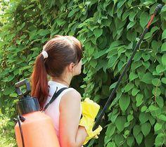 Česnekový olej zahubí mšice, ale slunéčku neublíží Watering Can, Vegetable Garden, Succulents, Water Bottle, Home And Garden, Pergola, Gardening, Ideas, Gardens