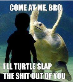 hehehe Turtle Slap