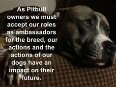 As Pit Bull owners