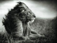 """""""Aprenda uma coisa: Se a vida tá te batendo tanto, é porque tu aguenta, é porque tu é forte."""""""
