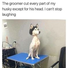 This poor dog. Lol This poor dog. Humor Animal, Funny Animal Jokes, Crazy Funny Memes, Really Funny Memes, Cute Funny Animals, Stupid Funny Memes, Animal Quotes, Funny Relatable Memes, Haha Funny