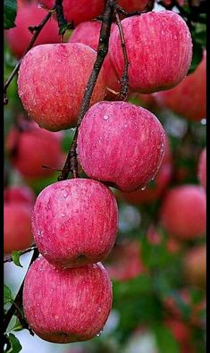 Gardens Discover Frutas Des Fruits is part of Fruit - Fruit Plants Fruit Garden Fruit Trees Fruit And Veg Fruits And Vegetables Fresh Fruit Apple Fruit Beautiful Fruits Beautiful Flowers