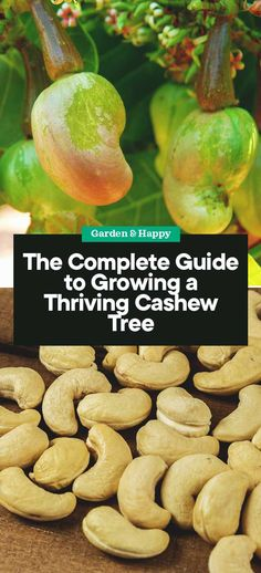 Lawn and Garden Tools Basics The Complete Guide To Growing A Thriving Cashew Tree Diy Gardening, Gardening For Beginners, Organic Gardening, Container Gardening, Vegetable Gardening, Sustainable Gardening, Cashew Tree, Organic Mulch, Sandy Soil