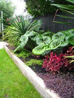 Garden Design: Auckland Landscape Designer, Kirsten Sach Landscape Design Ltd Tropical Garden, Tropical Landscaping, Roof Landscape, Plants, Landscape Design, Small Garden Landscape, Native Garden, Small Tropical Gardens, Tropical Landscape Design