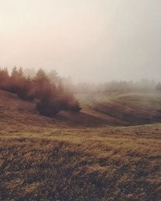 autumn field via @Habitually Chic