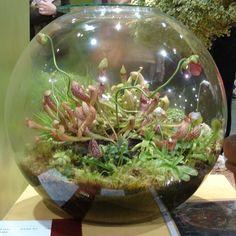 Terrarium Inspiration - Indoor Winter Gardening!