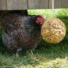 chicken balls!