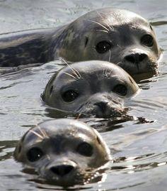 Beautiful seal faces ❤❤❤
