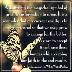 butterfly, transformation, enlightened, book of sh Monarch Butterfly Meaning, Butterfly Symbolism, Butterfly Tattoo Meaning, Butterfly Spirit Animal, Butterfly Quotes, Love And Light Quotes, Animal Meanings, Animal Spirit Guides, Animal Totems