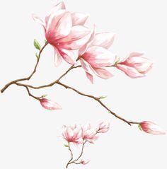 Watercolor pink magnolia flower, Watercolor Magnolia, Watercolor Pink Flower PNG and PSD Watercolor Flower Background, Watercolor Paintings, Flower Watercolor, Flower Art Drawing, Flower Graphic, Magnolia Flower, Flower Backgrounds, Botanical Illustration, Green Life