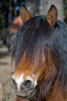 Horse-Ardenner