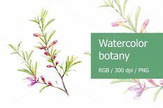 Watercolor botany by Svetlana Bakaldina on @creativemarket