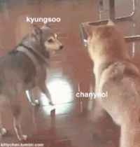 #wattpad #fanfic ❝Kim Taeyeon ama el drama en su vida stalker. Y es precisamente por esa razón que, al comienzo de un nuevo año escolar, fija su vista en la tensión que existe entre Byun Baekhyun y el chico nuevo, Park Chanyeol.  «Si ser stalker del Hunhan  terminó uniéndolos, ¿Por qué no con el Chanbaek?»❞ ✧Segund...
