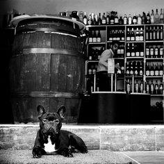 The Wine Dog