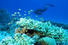 arrecifes(seychelles)