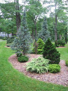 Two Gray Acres - Cedrus Deodara by Conifers2, via Flickr