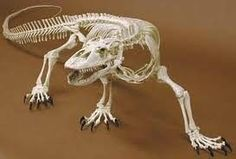 Instead of the chair inside my cabinet, I would implement a Komodo dragon's skeleton to shock the visitor and intrigue them. Komodo dragons are very rare, so this would be a sight to see.