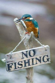 I don't think this little bird can read, hopefully there are no fines :)