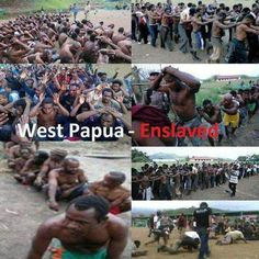 """EXAMINING APARTHEID AND SLAVERY IN INDONESIAN OCCUPIED WEST PAPUA hese are some of the photos showing the Indoensian government's attitude towards Melanesian West Papuans. They are regularly arrested stripped tortured and led away like slaves by the Indonesian government.APARTHEIDWest Papuans are often forced off their own lands to make way for the millions of Indonesian transmigrants sent by the Indonesian government for """"cultural assimilation"""". This has led to West Papuans being treated as…"""